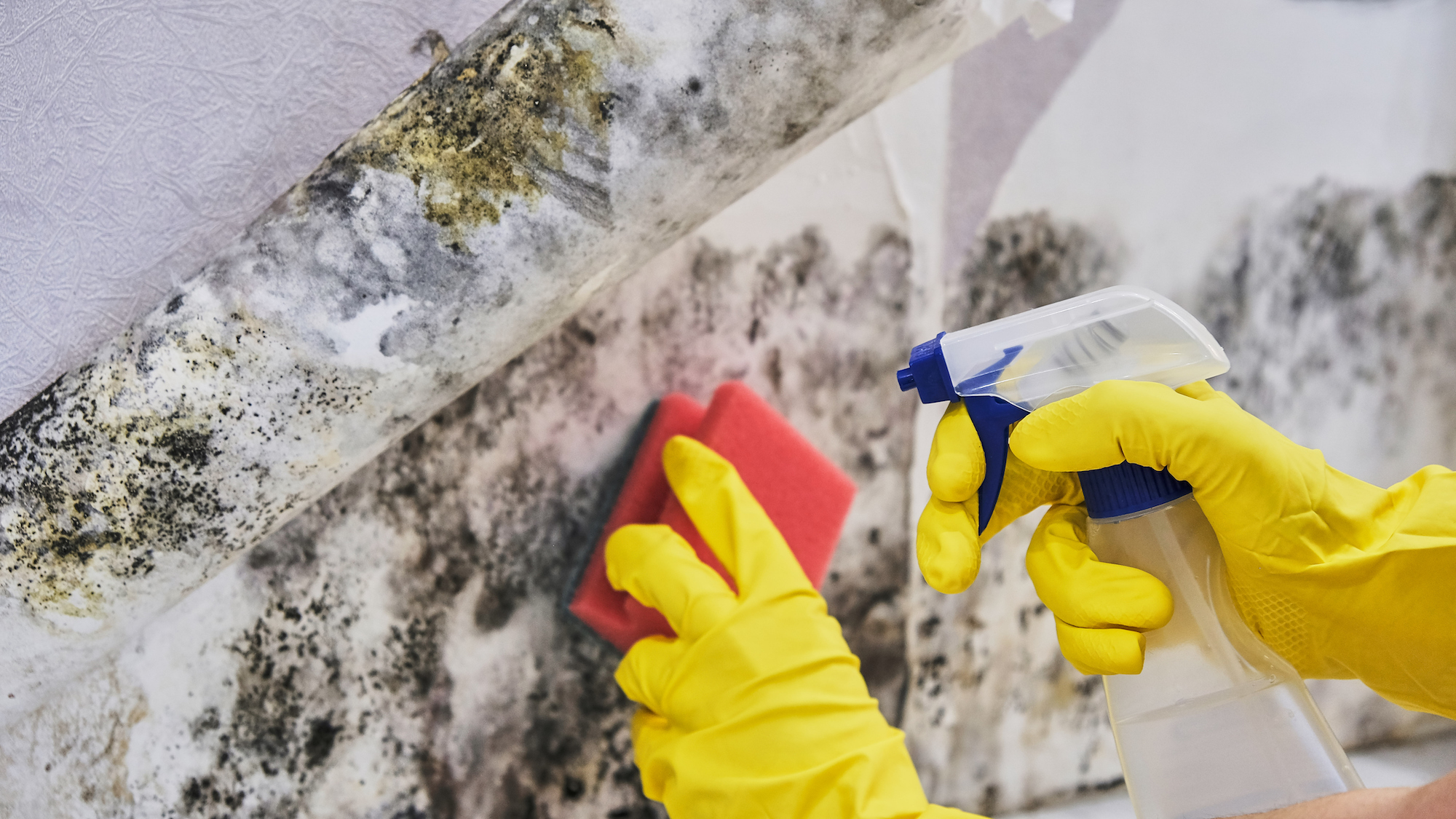 a picture of mold removal